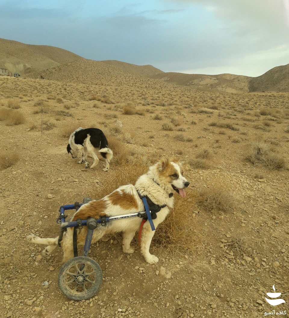 کمک به حیوانات آسیب دیده
