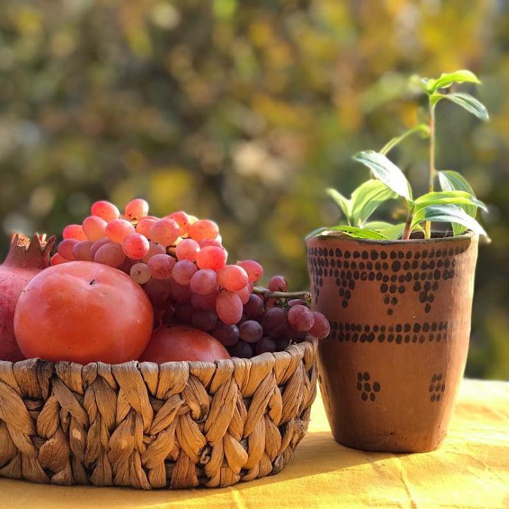 محصولات کلپورگان در آنسو